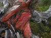 red snow gum