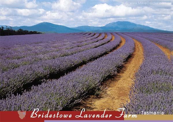 Bridestowe Tasmania