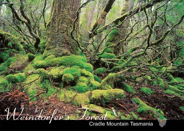 Weindorfers Forest Tasmania
