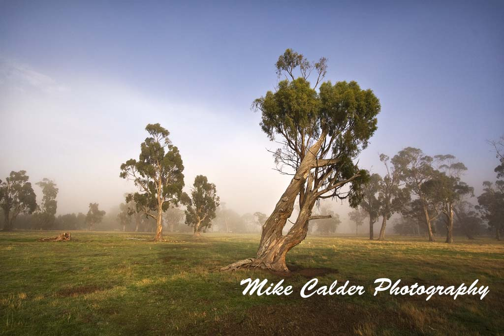 Midlands Trees