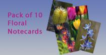 Tasmanian Flora Notecard Pack