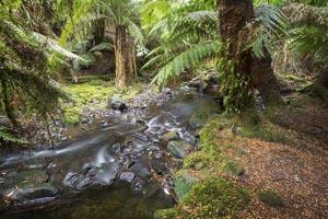 Russell Falls Creek 2