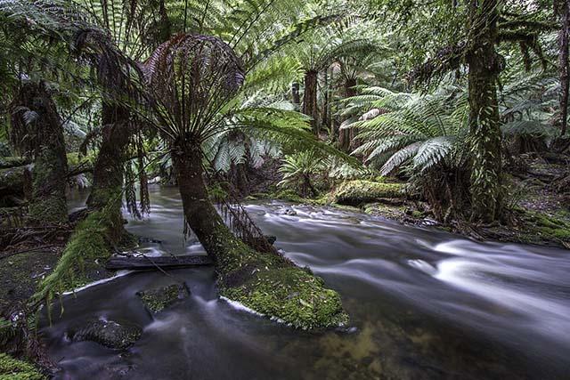 Russell Falls Creek 3